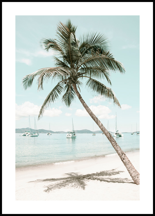 Caribbean Palm Tree Poster