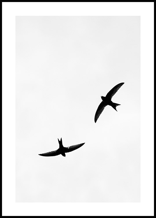 Birds Above Poster